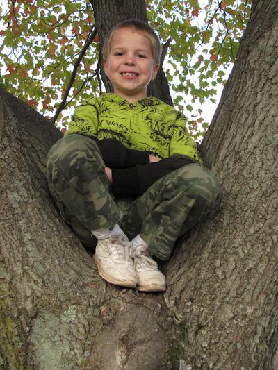 Steven in a tree